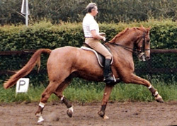 Photo of Marc Rijpens' trainer George Theodorescu riding Entertainer