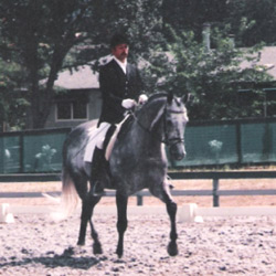 Marc Rijpens riding imported Dutch Warmblood Stallion Herald